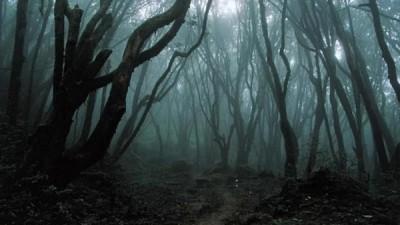 dark_forest-600x337