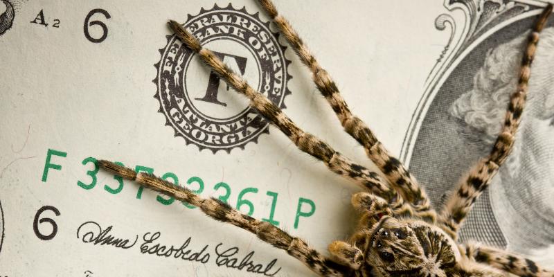 spider crawling across dollar bills